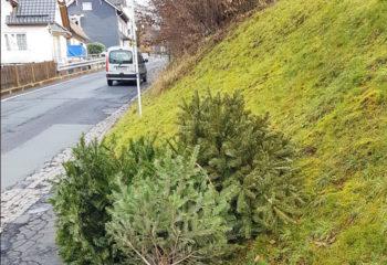 weihnachtsbaumaktion-baum-auf-strasse